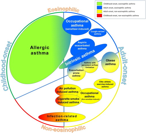 Developing And Emerging Clinical Asthma Phenotypes The